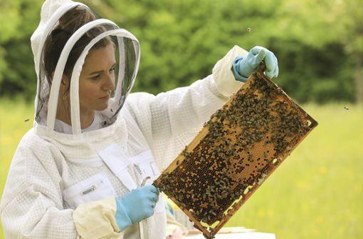 Porsche  siedelt 13 Bienenvölker auf  Wiese an