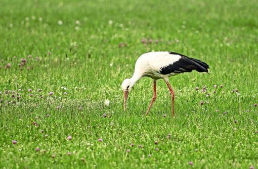 Der Storch macht auf dem Flugplatz Rast