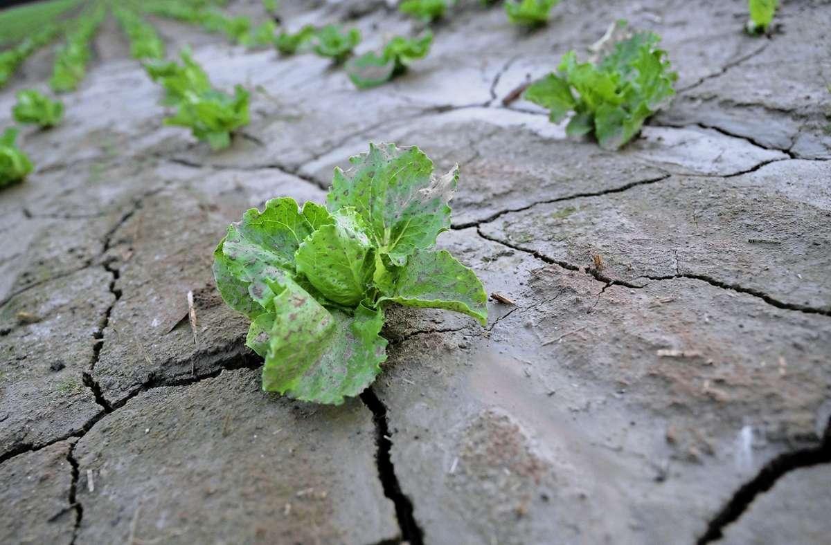 Das Land Baden-Württemberg will den Kommunen im Kampf gegen den  Klimawandel unter die Arme greifen. (Symbolbild) Foto: dpa/Marijan Murat