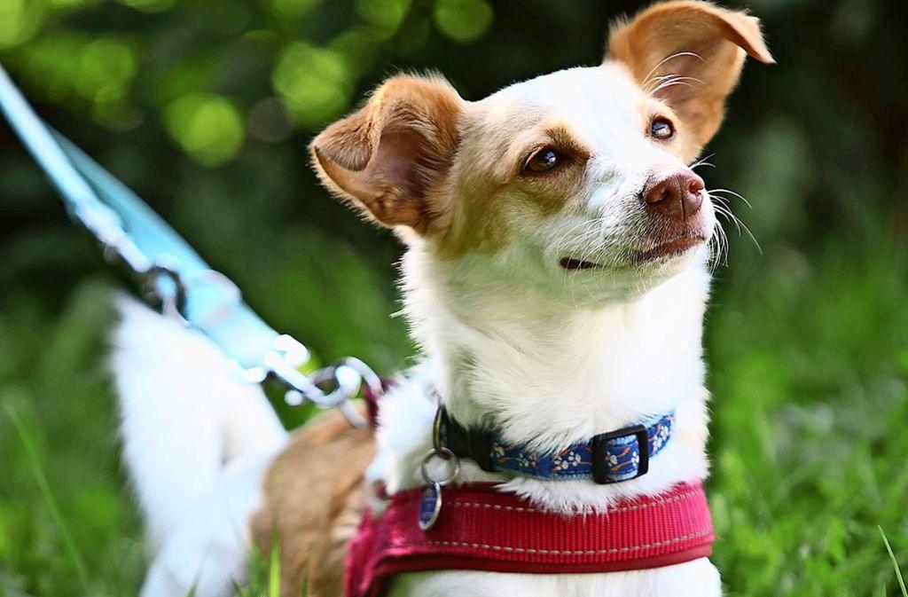 Ein Hund ist ein lebenslanger Begleiter, nicht nur bei temporärer Langweile. Foto: Lichtgut/Jan Reich