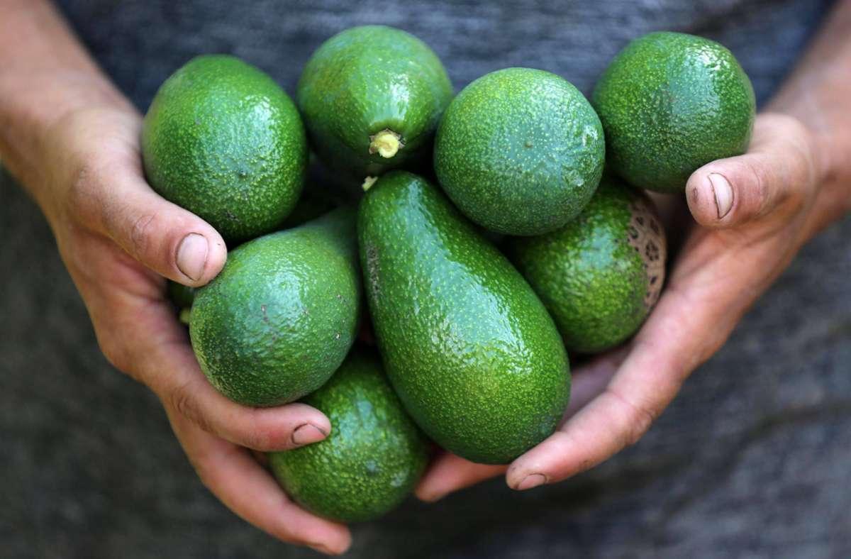 Avocados haben einen sehr großen Wasserverbrauch. Foto: imago images/ZUMA Wire/Ashraf Amra