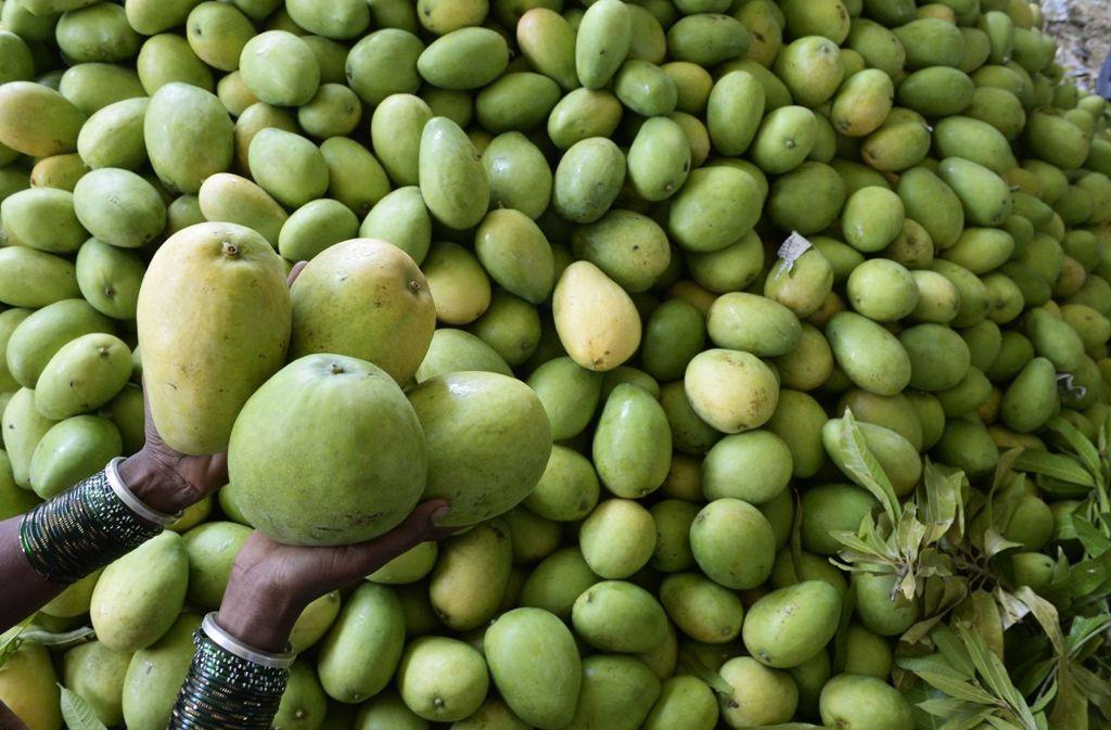 Alle Mangos müssen vernichtet werden. Foto: AFP
