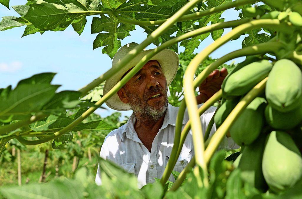 Helmut Lutz beschäftigt auf seiner Plantage in Ghana rund 200 Mitarbeiter. Foto: dpa/Gioia Forster