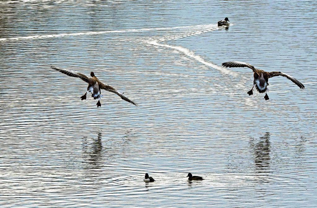 Viele Ausflügler besuchen das Naturschutzgebiet Zugwiesen, um das Federvieh zu beobachten oder zu fotografieren. Foto: factum/Weise