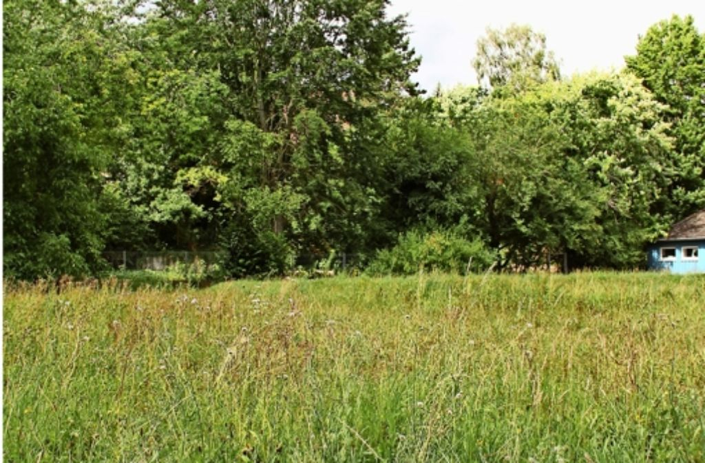 Ein Flurstück    unterhalb des ehemalige Kita-Grundstücks am Entenweg 20    kommt als   Jugendtreff-Standort in Frage. Foto: