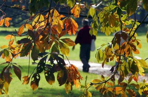 Bäume vor der Wilhelma erhalten