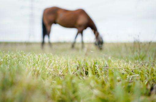 Schwer verletztes Pferd nach Unfall mit Lkw eingeschläfert