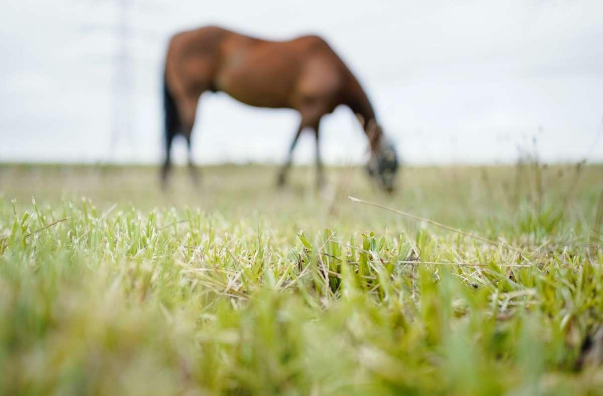 Ein Pferd musste nach einem Unfall im Kreis Reutlingen eingeschläfert werden (Symbolbild). Foto: dpa/Uwe Anspach
