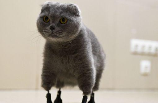 Katze läuft mit vier Titan-Prothesen aus 3D-Drucker