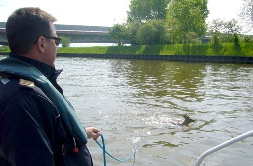 Polizei rettet Reh aus Neckarkanal
