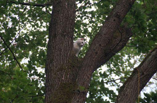 "Katze ""Penny"" aus Baum in 25 Meter Höhe gerettet"