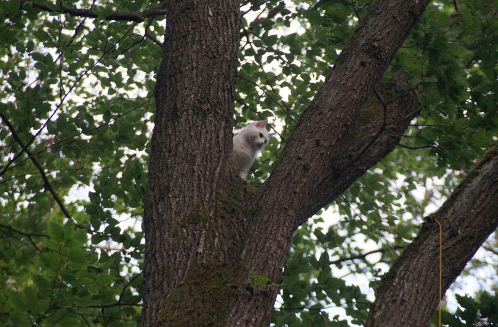 """Rauf kam sie. Nur runter, das traut sich Katze """"Penny"""" nicht. Foto: SDMG"""