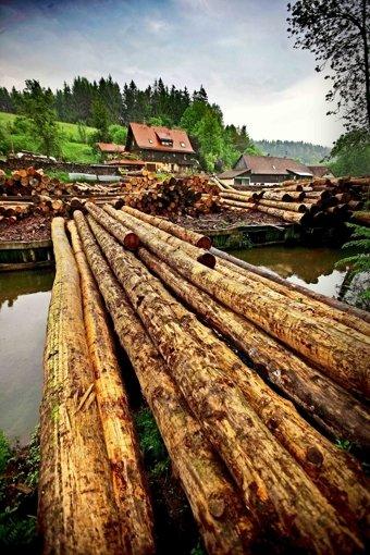 Neue Strukturen für den Holzverkauf