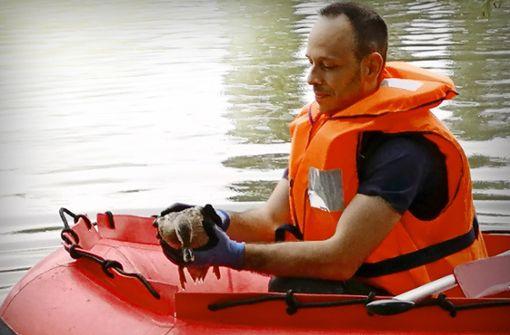Feuerwehr rettet verletzte Ente