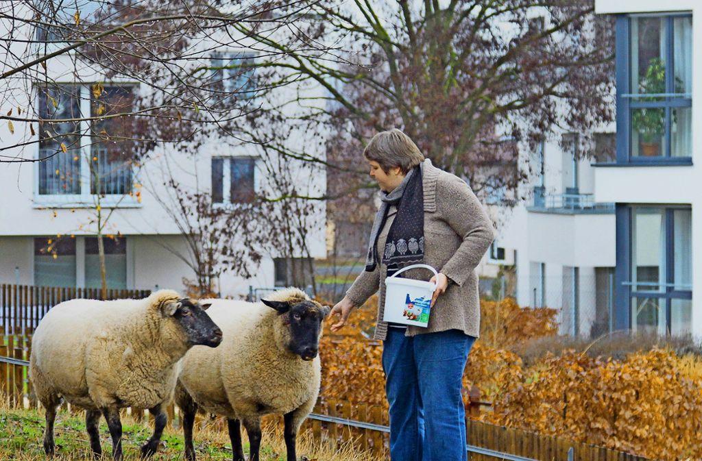 Für Franzi und Sternchen wird es in wenigen Monaten Nachfolger im Freigehege des Samariterstifts geben. Foto: factum/Archiv