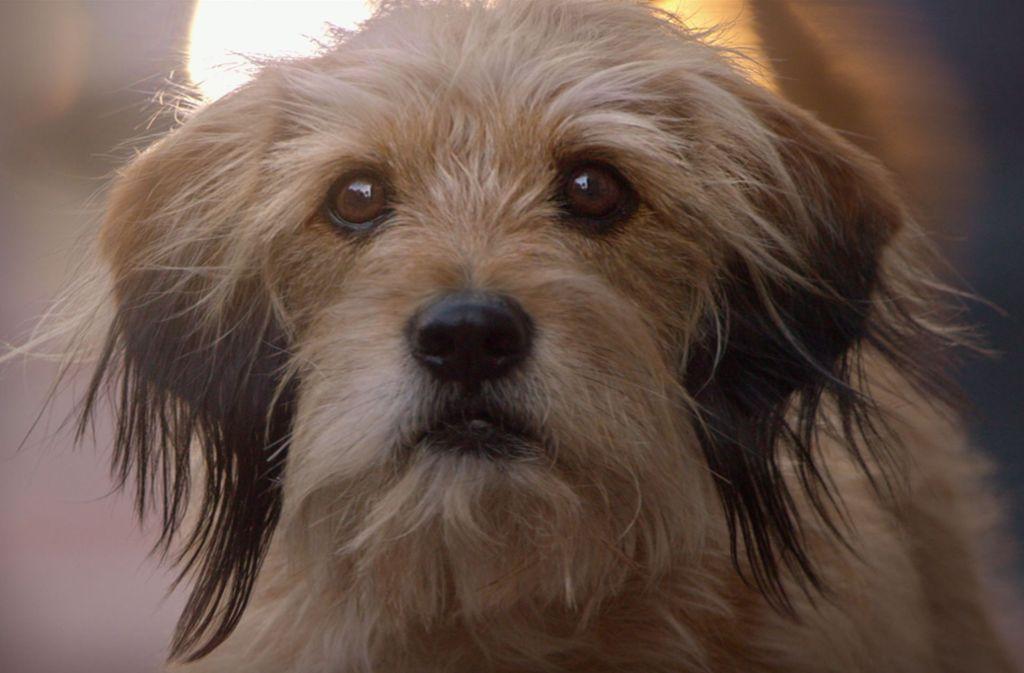 """Schau mir in die Augen, Nutzer: Die Hundeserie """"Benji"""" empfiehlt Netflix gerade besonders gerne. Foto: Netflix"""
