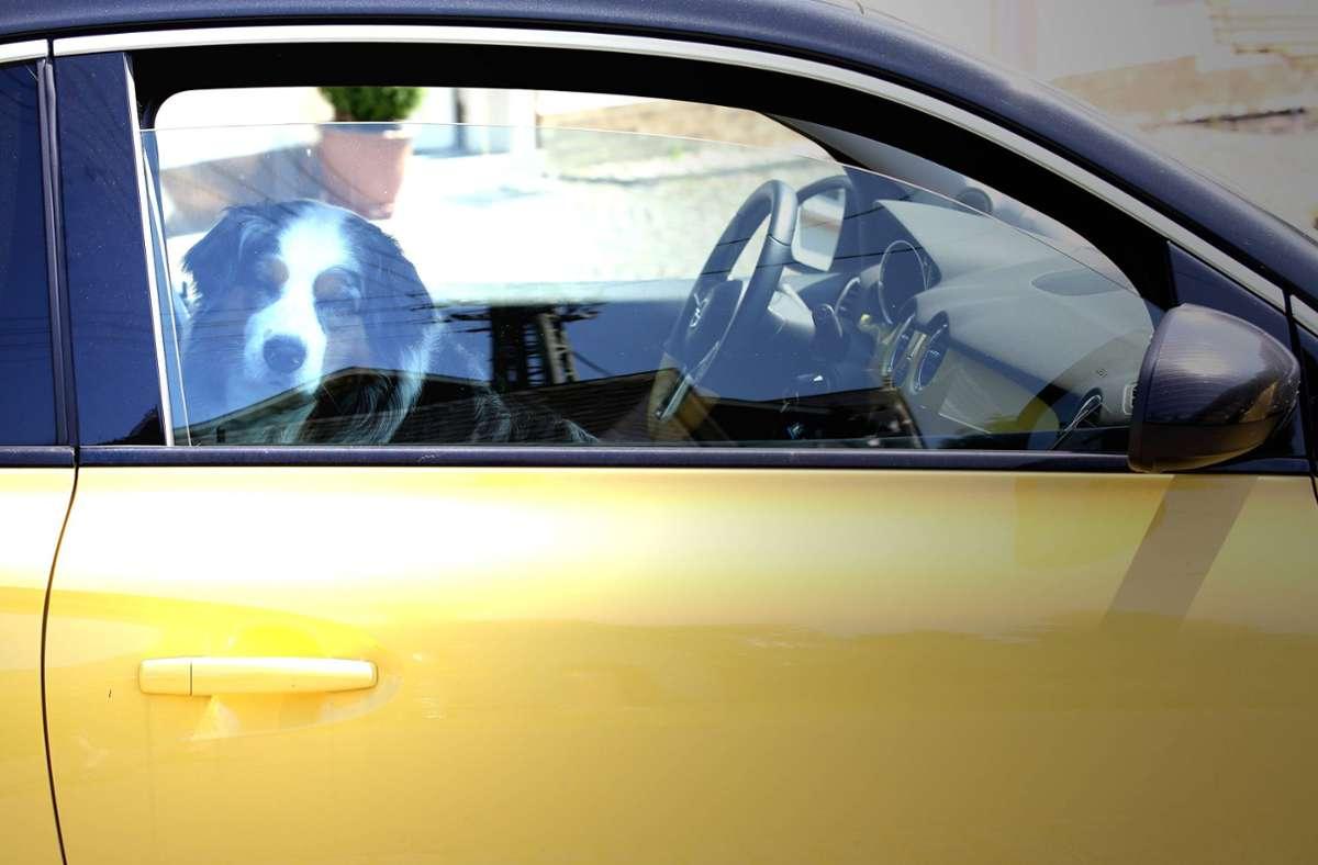 Zwei Hunde wurden aus  einem überhitzen Auto befreit. (Symbolbild) Foto: imago/Rene Traut/RT
