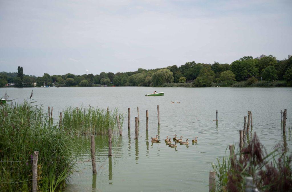 Erst war im Eyth-See hochwachsendes Kraut ein Problem, nun nehmen die Algen überhand. Foto: Lichtgut/Julia Schramm