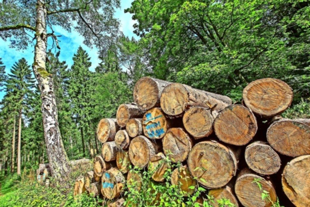 Es geht ums Holz ... Foto: dpa