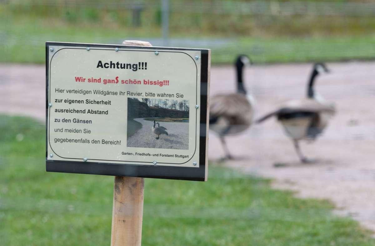 Absperrung wegen Wildgänsen im Höhenpark Killesberg in Stuttgart. Foto: dpa/Marijan Murat