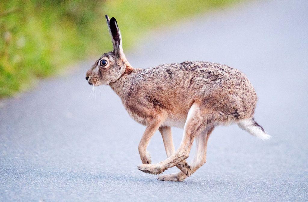 Wildlebende Tiere – ob lebendig oder tot – sollte man nicht streicheln. Foto: dpa/Julian Stratenschulte