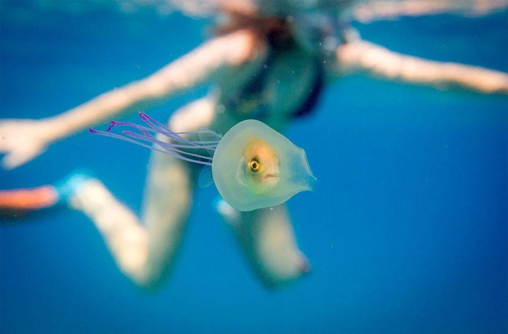 Wie komme ich hier bloß wieder raus, wird sich der Fisch fragen. Foto: AFP