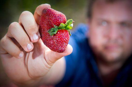 Australier geschockt: Erdbeeren voller Nadeln