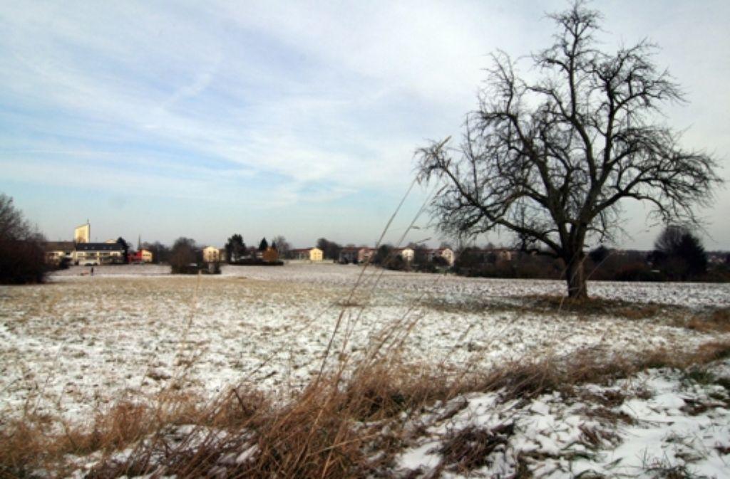 Auf dem Neubaugebiet Langenäcker-Wiesert Foto: Chris Lederer
