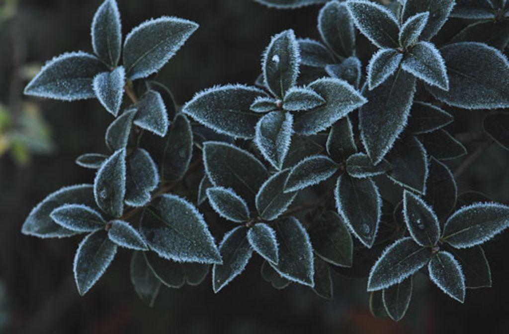 Frost auf den Pflanzen kündet vom Einzug der kalten Jahreszeit. Foto: Leserfotograf rolfino09