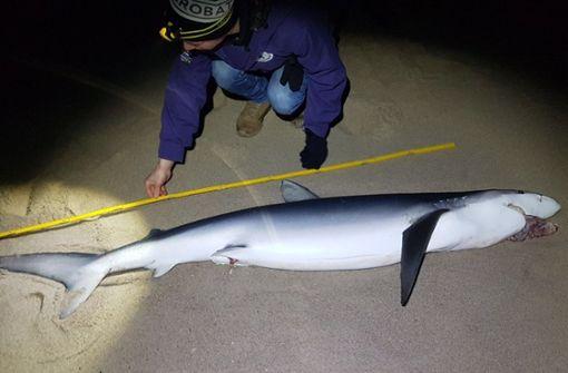 Toter Blauhai angeschwemmt