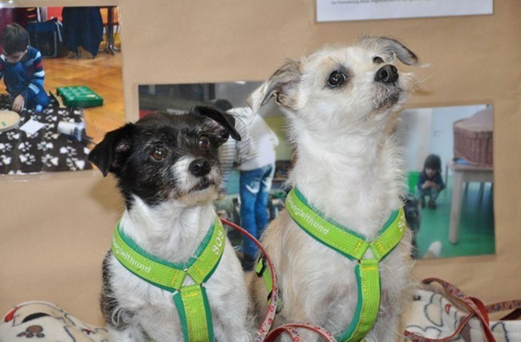 Süß. Aber was haben diese Hunde mit der Evangelischen Hochschule zu tun? Foto: privat