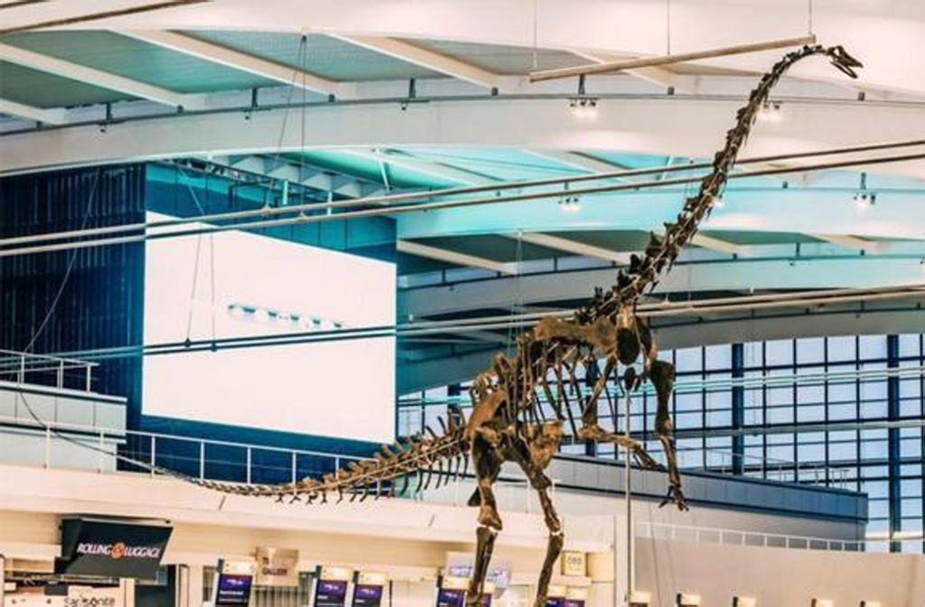 Das Skinny getaufte Skelett des rund 155 Millionen Jahre alte Langhals-Sauriers, ein enger Verwandter der Gattung Diplodocus, im Flughafen London Heathrow. Foto: Aguttes Auctions/dpa