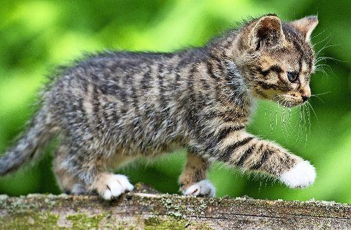 Wo Katzen  gefährlich leben