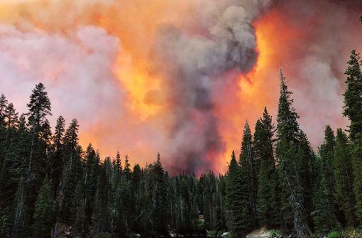 Waldbrand versperrt 1000 Campern den Fluchtweg