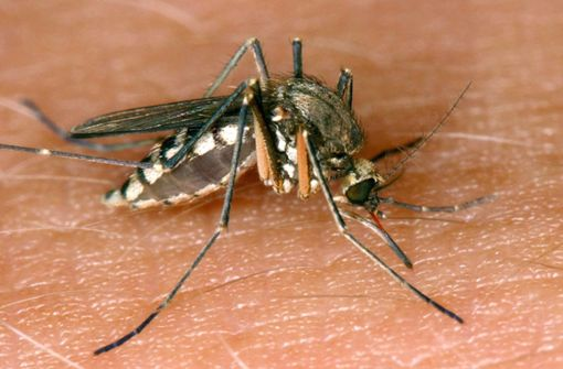 Tödliches West-Nil-Virus breitet sich in Europa weiter aus