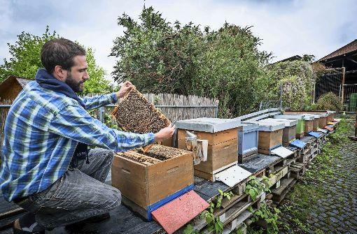 Bienen fühlen sich in der Stadt  ganz wohl