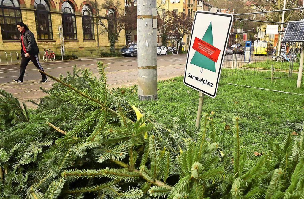 Am Erwin-Schoettle-Platz liegen bereits die ersten Weihnachtsbäume. Foto: Lichtgut/Max Kovalenko