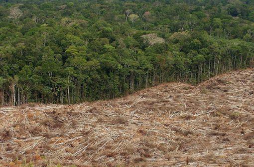 Wer schützt die Bäume?