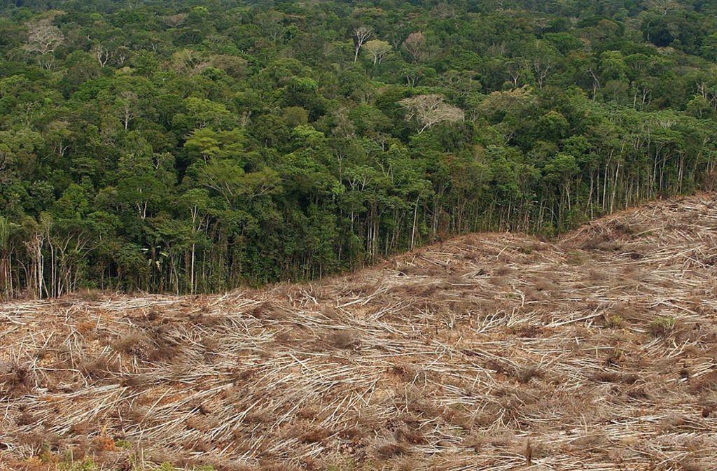 Gefällte Bäume am Rad eines Urwaldes in der brasilianischen Amazonas-Region Foto: dpa/Marcelo Sayao