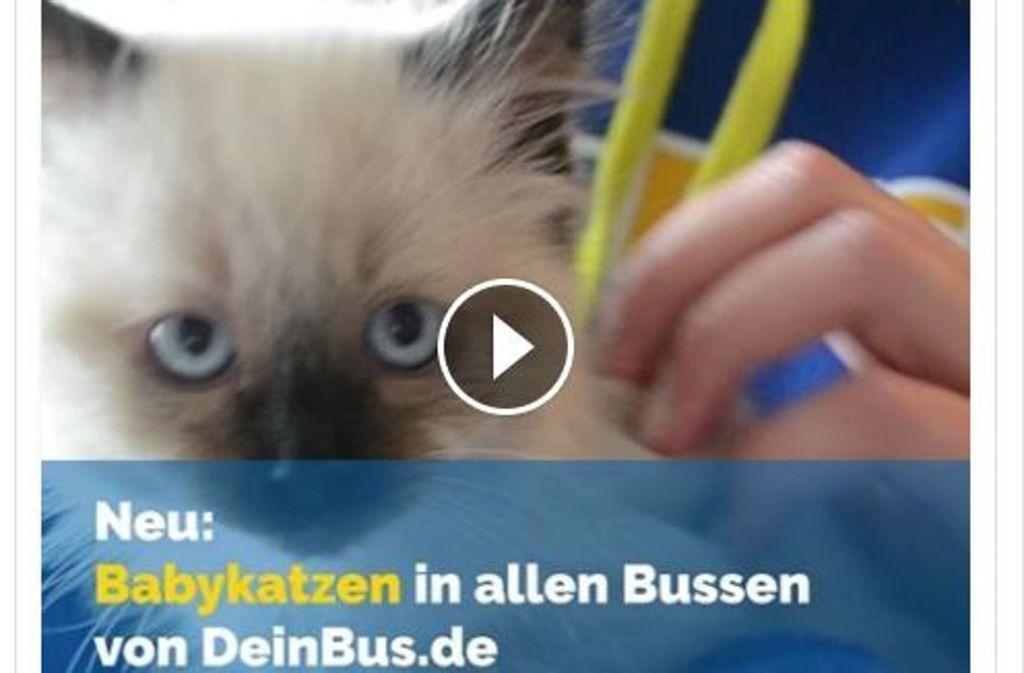 Wer hätte nicht gerne auf Busreisen eine kleine Katze zum Kraulen? Foto: Facebook/@DeinBus
