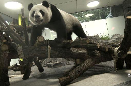 Ein Staatsakt für die Pandas