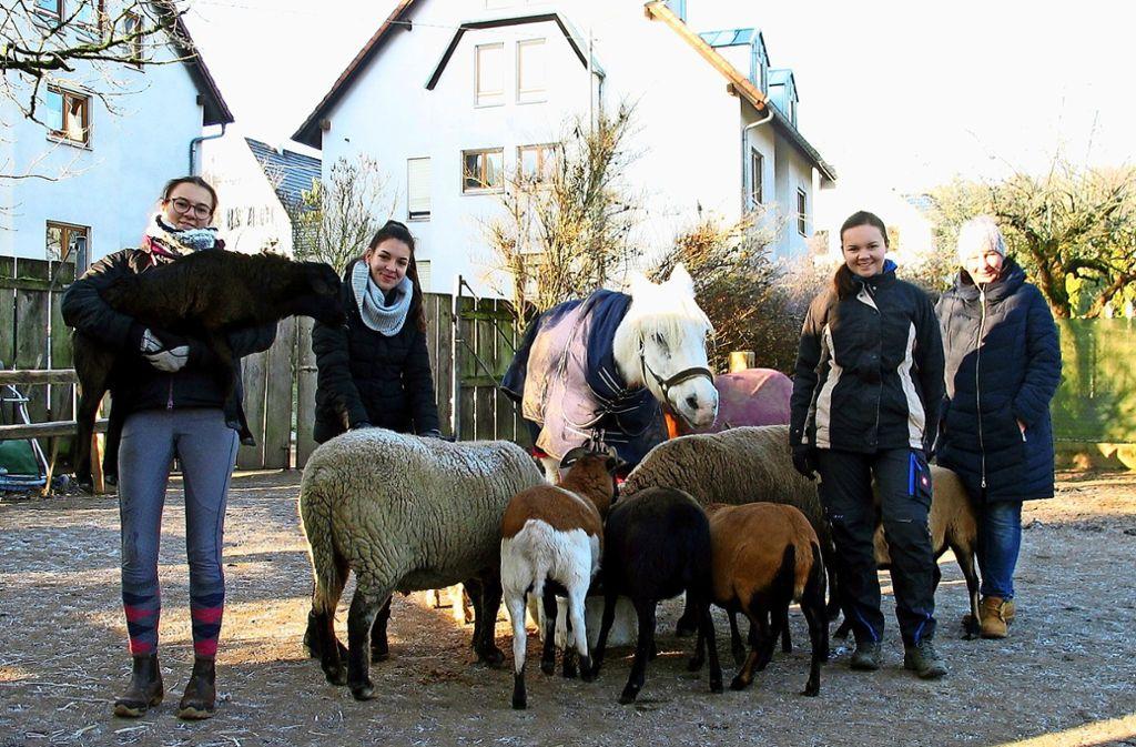 Schülerinnen haben sich am Tag des Ehrenamtes auf der Feuerbacher Animal Farm engagiert. Foto: Susanne Müller-Baji