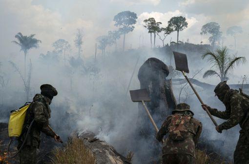 Der Regenwald ist keine nationale Angelegenheit