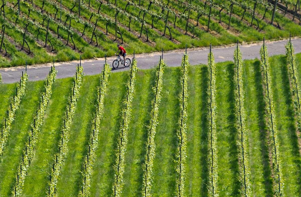 Eine Radtour durch Stuttgarts Weinberge? Der Sonntag ist der ideale Tag dafür. Foto: dpa/Daniel Bockwoldt