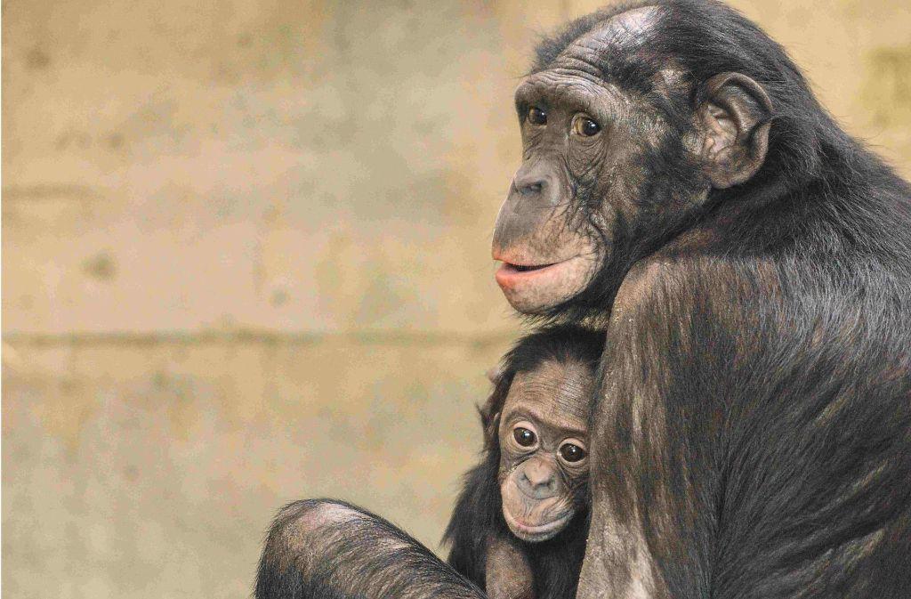 Nayembi und ihre Tochter Nila sind in den Frankfurter Zoo umgezogen. Foto: Jutta Hof