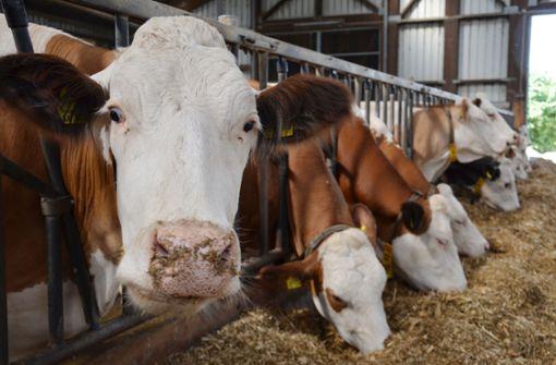 Sinkende Milchpreise setzen Landwirte unter Druck