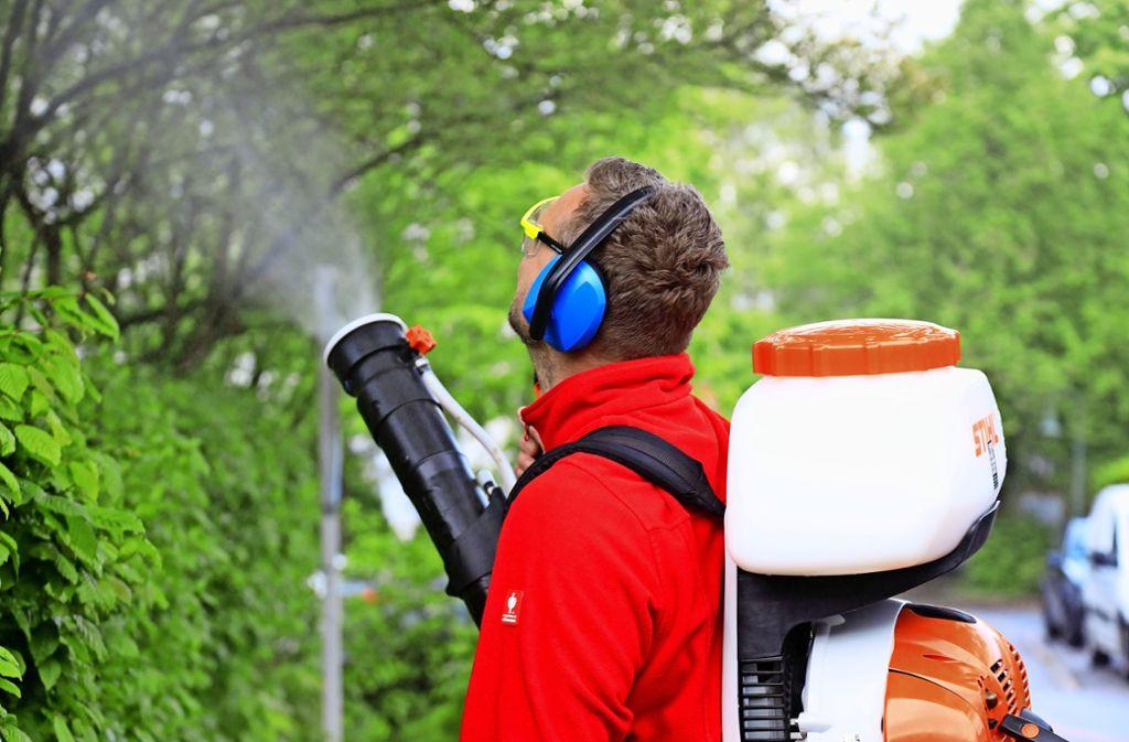 Dennis Hoffmann ist Schädlingsbekämpfer. In seinem Gerät ist eine Mischung aus Wasser und Neemöl. Foto: Thomas Krämer
