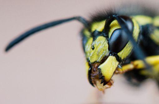 Zwei Unfälle durch Wespen ausgelöst