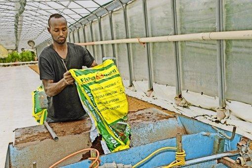 Viele Flüchtlinge  – wie dieser junge Somalier – wollen gerne arbeiten. Foto: epd