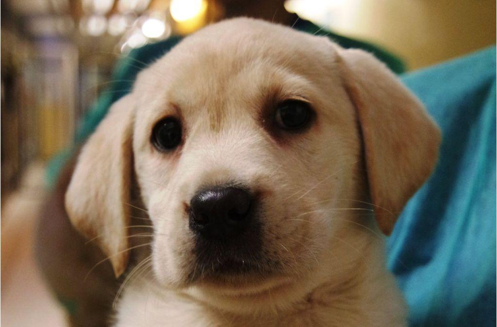 Viele Kinder wünschen sich zu Weihnachten einen Hund – doch solch eine Anschaffung will gut überlegt sein. Foto: dpa